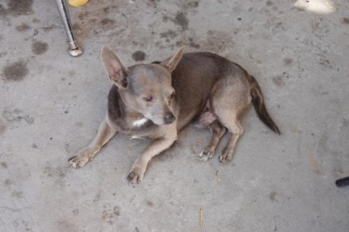 Lost Male Dog last seen Central Ave. & 41st Street, Los Angeles, CA 90011