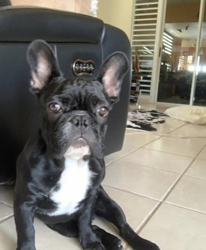 Lost Male Dog last seen Gregory Way, Beverly Hills, CA 90211
