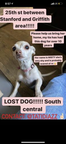Lost Female Dog last seen Adams, San Pedro, Central, Los Angeles, CA 90011