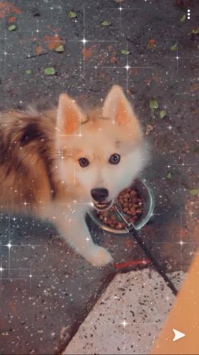 Lost Male Dog last seen Near sw 27 st, Miami, FL 33133