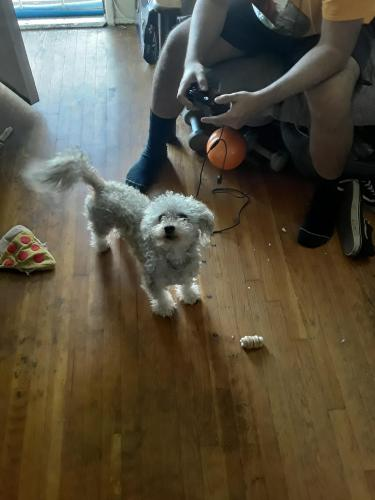 Lost Male Dog last seen Downey ave, Downey, CA 90241