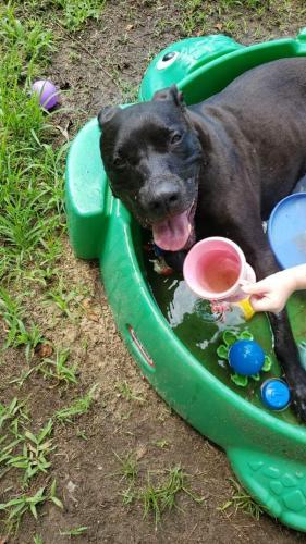 Found/Stray Female Dog last seen Fist trailer wit swing, Graham, NC 27253