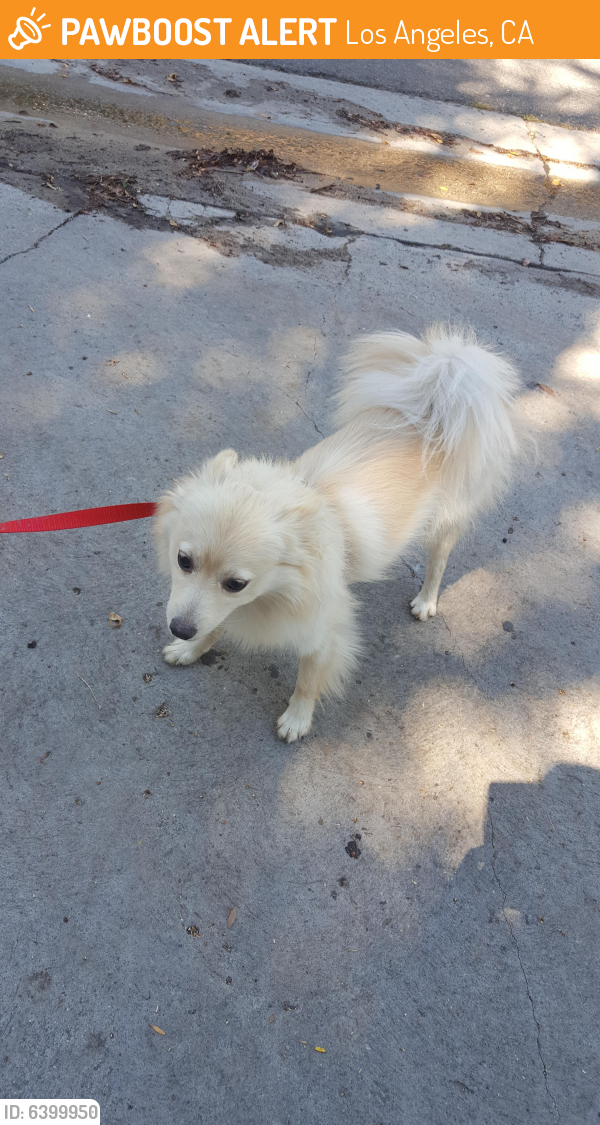 Found/Stray Male Dog last seen Hood Drive & Winnetka, Los Angeles, CA 91364