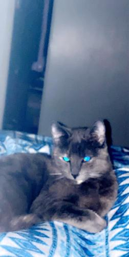 Lost Female Cat last seen Knott and savanna, Anaheim, CA 92804