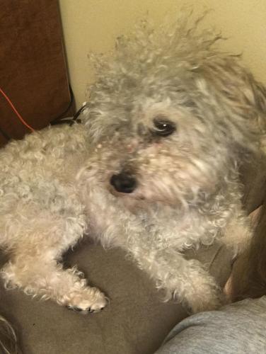 Lost Male Dog last seen Brookshire/5th street, Downey, CA 90241