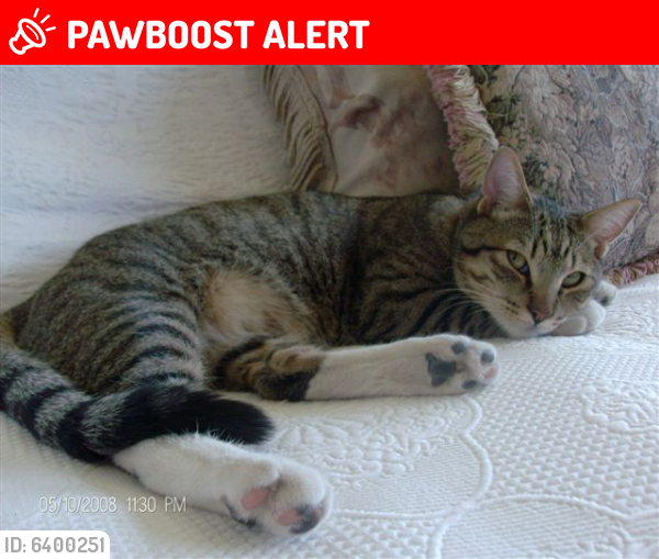 Deceased Male Cat last seen 17th St South Pacific, Sunset Beach , Huntington Beach, CA 90742