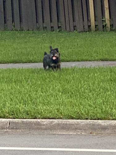 Found/Stray Unknown Dog last seen Saw 112 st and 135 ave, Miami-Dade County, FL 33156