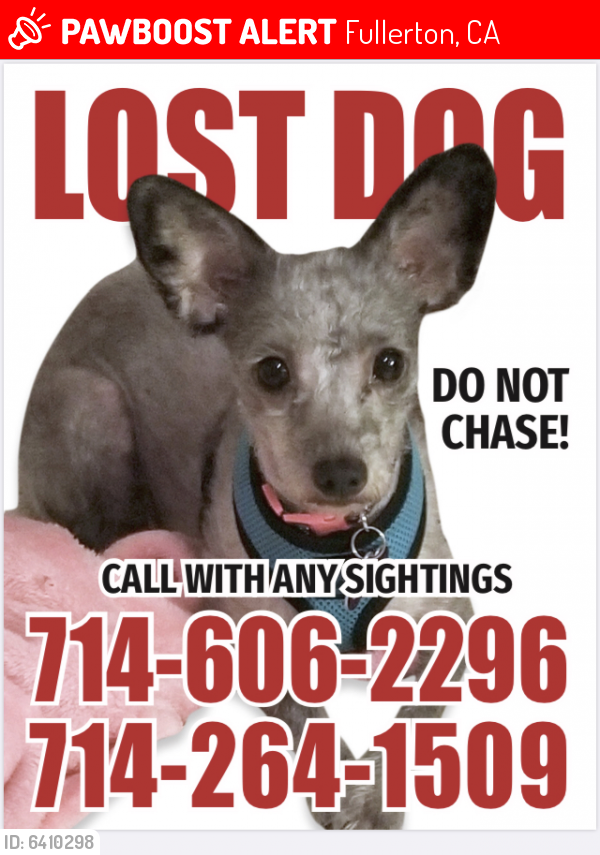 Lost Female Dog last seen Euclid/Malvern, Fullerton, CA 92833