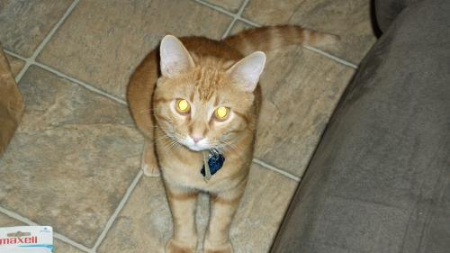 Lost Male Cat last seen My apartment at 19th Avenue and Thunderbird, Phoenix, AZ 85023
