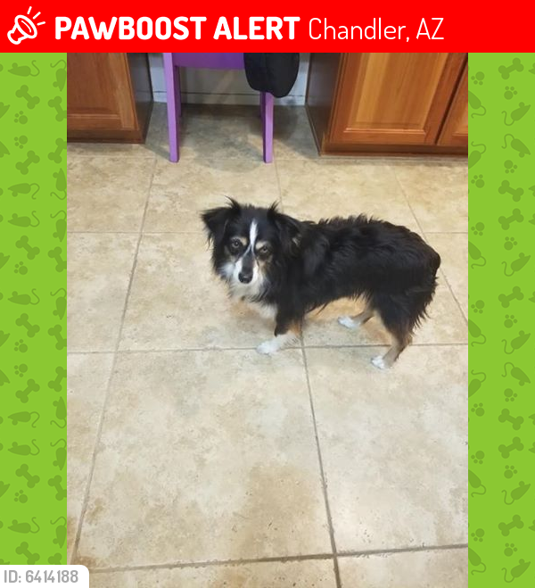 Lost Female Dog last seen Chandler Heights and Lindsay Rd, Chandler, AZ 85249