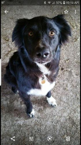 Lost Male Dog last seen Hagerman and FM 120, Pottsboro, TX 75076