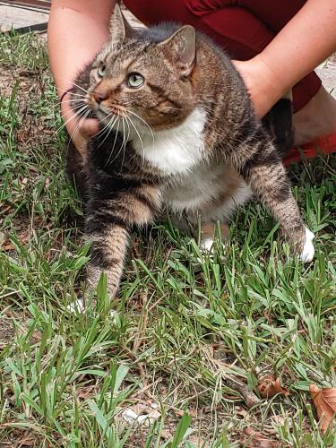 Found/Stray Unknown Cat last seen Maryland Ave & Colonial Ave, Norfolk, VA 23508