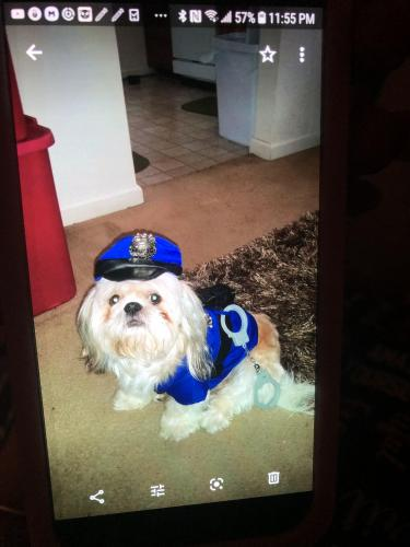 Lost Male Dog last seen Near eleven , Norfolk, VA 23502