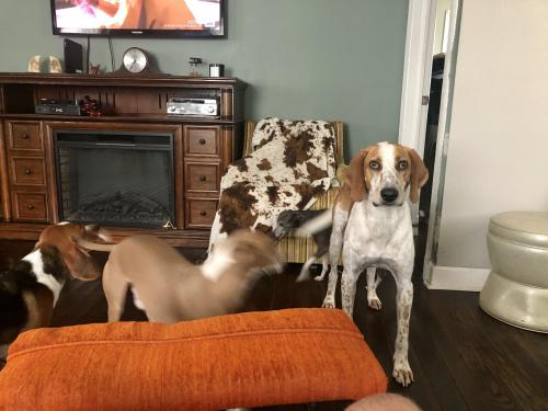 Lost Male Dog last seen Near Stanley rd , Portsmouth, VA 23701