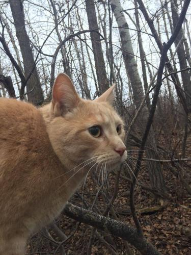 Lost Found Dogs Cats And Pets In Edmonton Ab T6a 3l7 Page 1 Pawboost