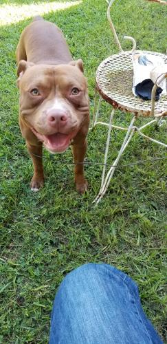 Lost Male Dog last seen Emmons Place Cradock area, Portsmouth, VA 23702