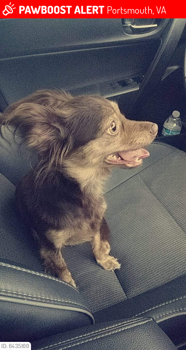 Lost Female Dog last seen Airline blvd, Portsmouth, VA 23701