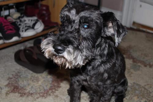 Lost Male Dog last seen Segundo,Wilmington, central, Rosecrans, Willowbrook, CA 90222