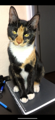 Lost Female Cat last seen Treepoint and Rock Meadow , Arlington, TX 76017