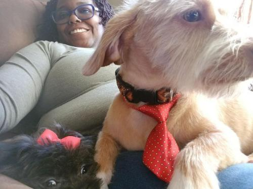 Lost Male Dog last seen George Washington and Moses Grandy, Chesapeake, VA 23323