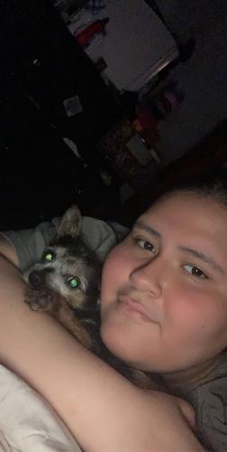 Found/Stray Male Dog last seen Bushwick, Newport News, VA 23607
