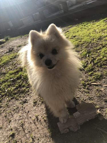 Lost Male Dog last seen Halifax dr, Virginia Beach, VA 23464