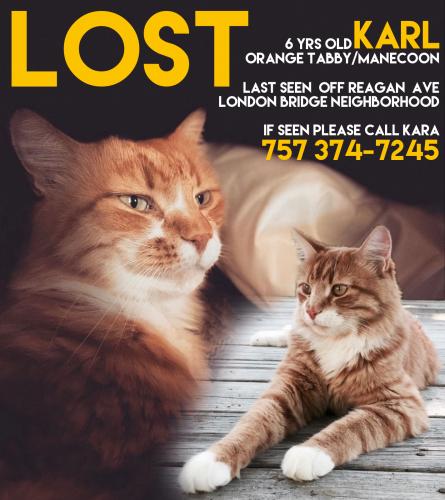 Lost Female Cat last seen Reagan Ave & Wayman Lane, behind the Renaissance Place shopping center., Virginia Beach, VA 23454