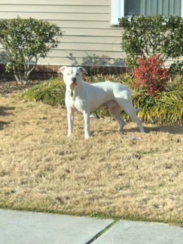 Lost Male Dog last seen George Washington and Alabama Ave , Portsmouth, VA 23523