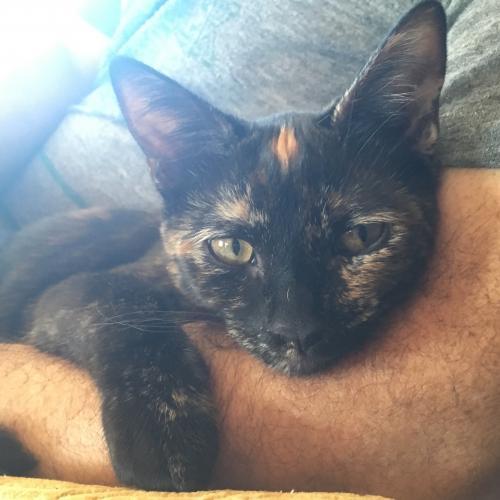 Lost Female Cat last seen Hanscom Drive and Illinois, South Pasadena, CA 91030