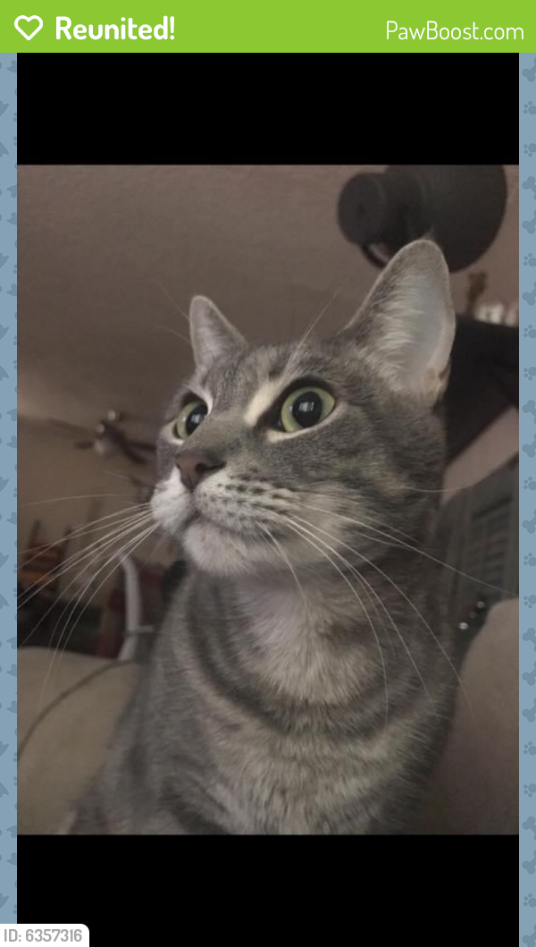 Reunited Female Cat last seen Hollywood/Fuller , Los Angeles, CA 90046