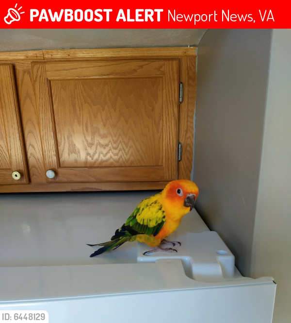 Lost Female Bird last seen Tabbs Lane and Canterbury Run, Newport News, VA 23602
