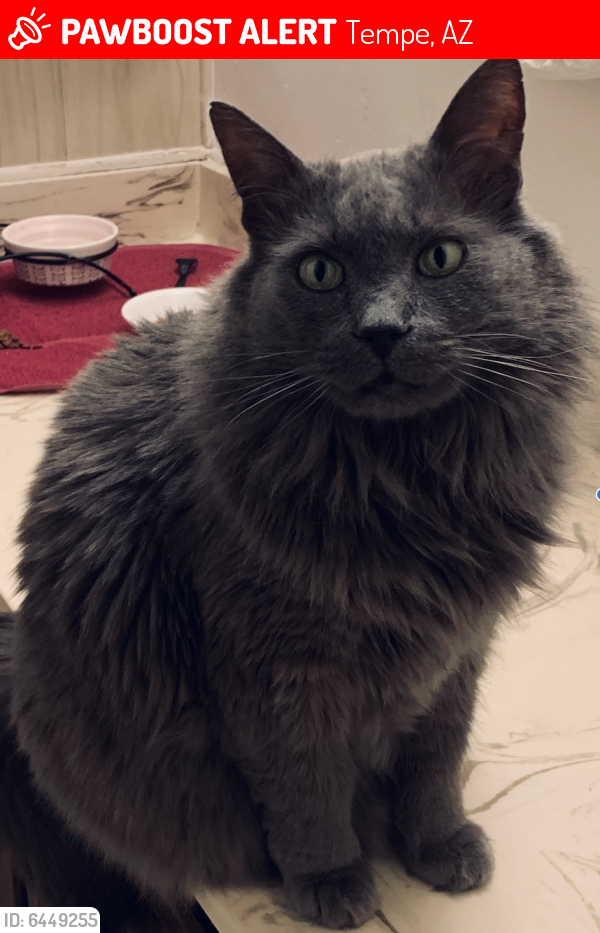 Lost Male Cat last seen 48th and West Southern Ave Tempe 85282, Tempe, AZ 85282