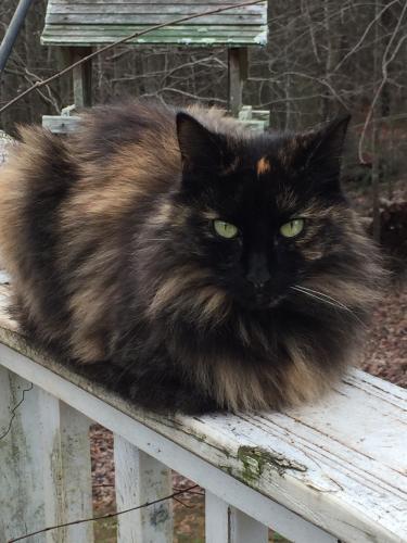 Lost Female Cat last seen Bethel-Bower & JB Owens, Bethlehem, GA 30620
