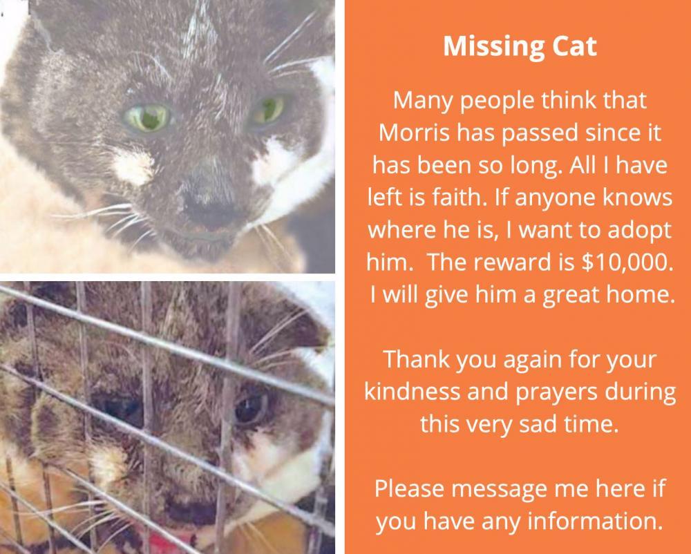Lost Male Cat last seen Near Dune Rd & Jessup Ln, Westhampton Beach, NY 11978