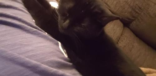 Lost Female Cat last seen Troy ave and Tacoma , Indianapolis, IN 46203
