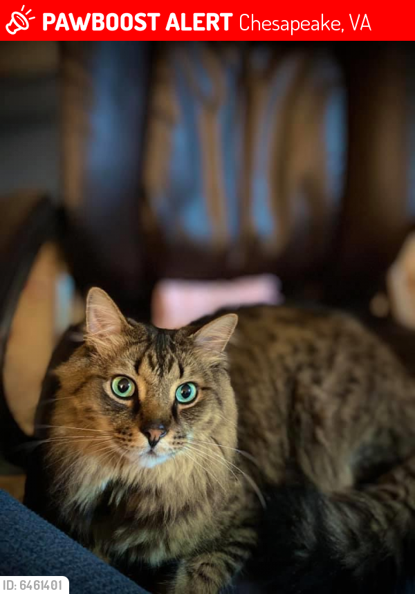Lost Male Cat last seen Townspoint rd and Pughsville rd, Chesapeake, VA 23321