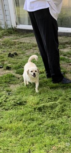 Lost Female Dog last seen Near Augustine circle , Portsmouth, VA 23703