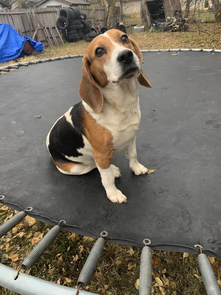 Reunited Male Dog last seen Rankin Elementary school, Arlington, TX 76010