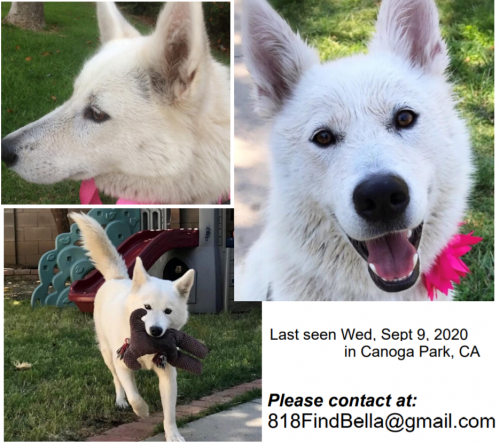 Lost Female Dog last seen Shoup Ave & Strathern St, Los Angeles, CA 91304