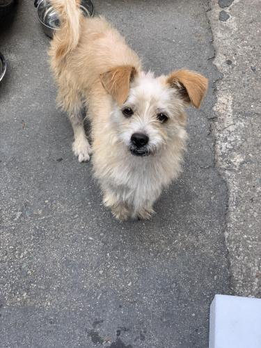 Found/Stray Male Dog last seen Westminster blvd  & Olive St (right by the used car dealership), Westminster, CA 92683