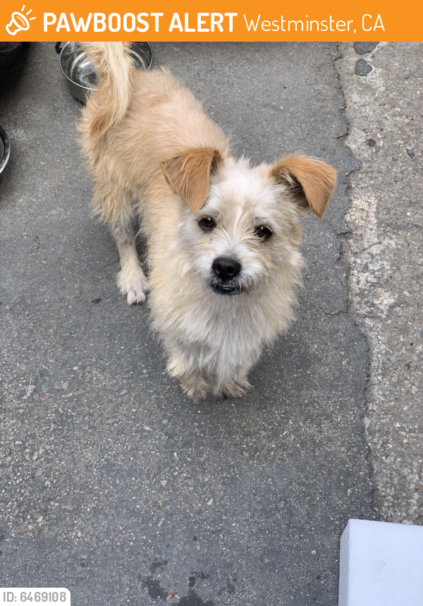 Rehomed Male Dog last seen Westminster blvd  & Olive St (right by the used car dealership), Westminster, CA 92683