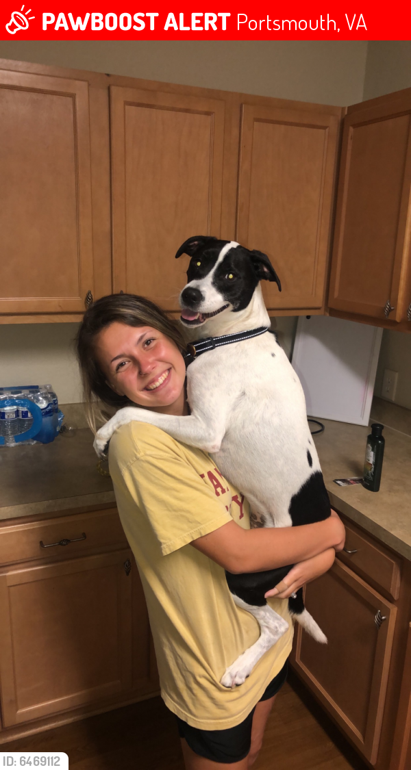 Lost Male Dog last seen New Gosport Military housing, down the street from naval shipyard, Portsmouth, VA 23702