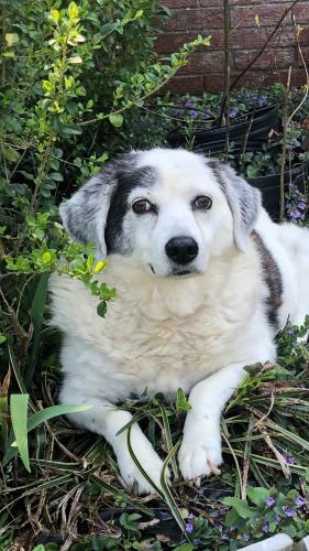 Lost Male Dog last seen Ewell Ln and Hillwell Rd, Chesapeake, VA 23322