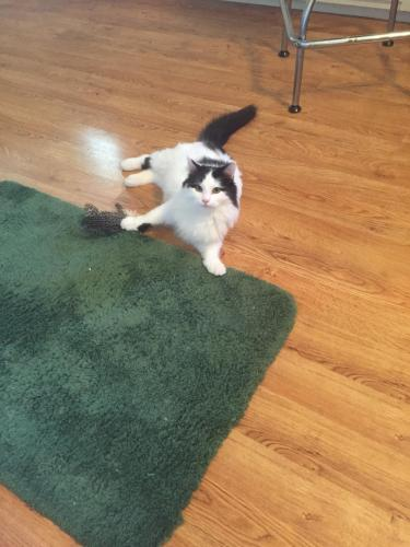 Lost Male Cat last seen Raymond and Post Rd, Indianapolis, IN 46239