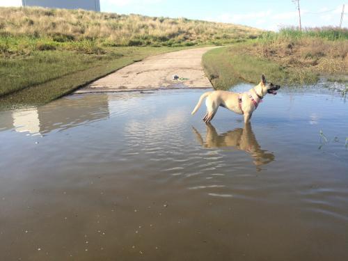 Lost Female Dog last seen Hwy 10 & Precinct Line Rd Hurst, Texas, Hurst, TX 76053