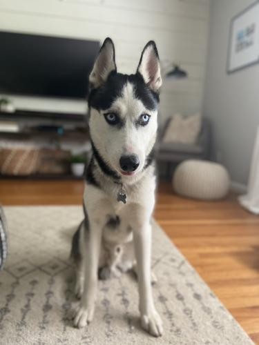 Found/Stray Male Dog last seen Pogue's Park - Indy , Indianapolis, IN 46218