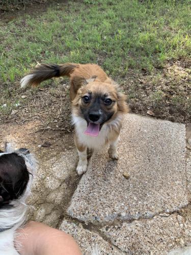 Found/Stray Male Dog last seen Michael Blvd and Wanda Way, Hurst, TX 76053