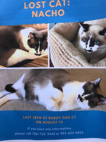 Lost Male Cat last seen Ruddy Oak ct, Virginia Beach, VA 23453