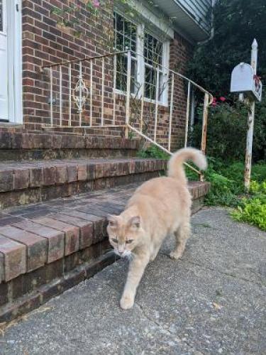 Found/Stray Unknown Cat last seen Erskine,Virginia Beach Blvd, North Witch Duck, Virginia Beach, VA 23462