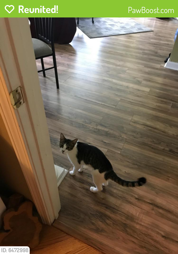 Reunited Male Cat last seen Kempsville and Battlefield Blvd, Chesapeake, VA 23320